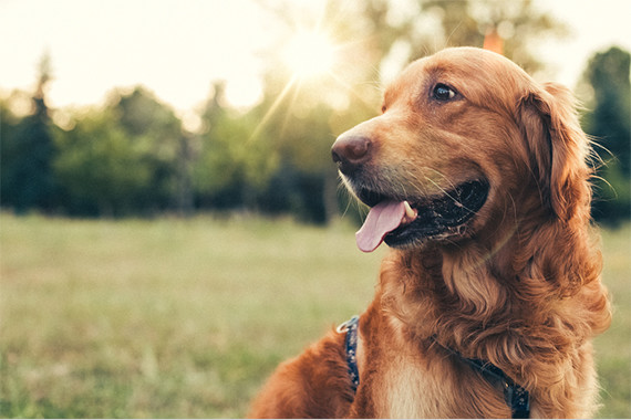 Discount Pet Supplies & Meds Online for Dogs, Cats, Horses & More
